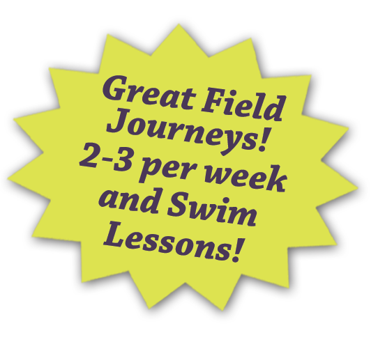 Stepping Stone School Summer Camp - Field Journeys and Swim Lessons
